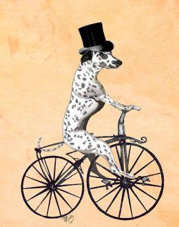 Dalmatian On Bicycle
