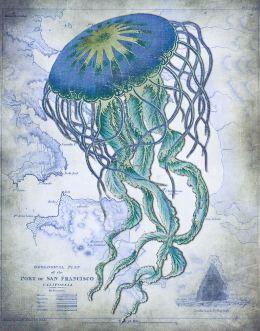 Jellyfish On image of Nautical Map