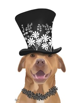 Pit Bull with Black Hat