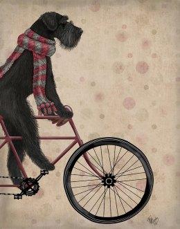 Schnauzer on Bicycle