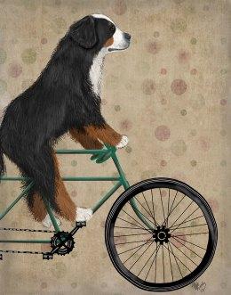 Bernese Mountain Dog On Bicycle