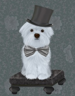 Maltese with Top Hat