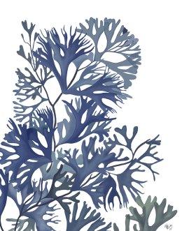 Seaweed 2 Blue Large