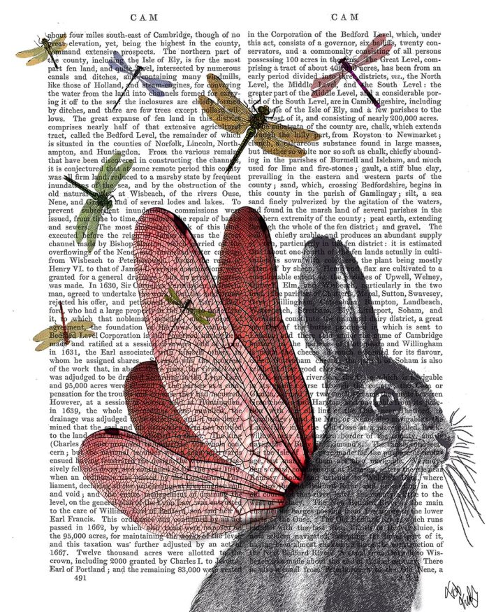 Dragonfly Hare
