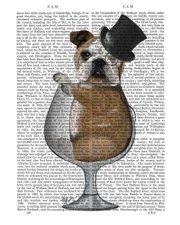 English Bulldog in Brandy Glass