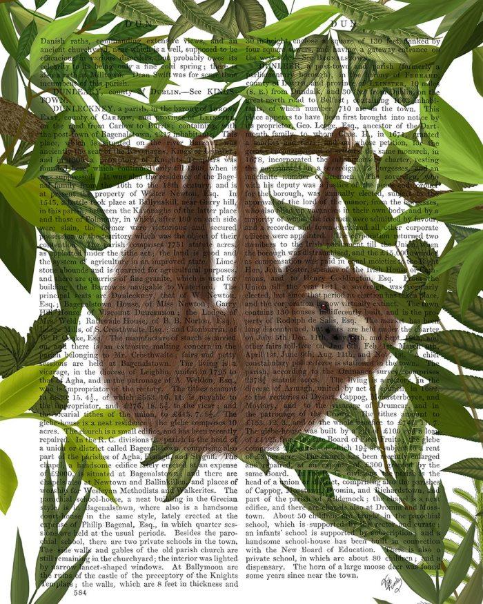 Sloth Hanging Around