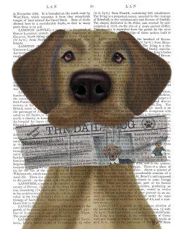 Great Dane Newspaper