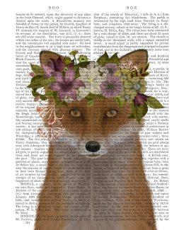 Fox Bohemian