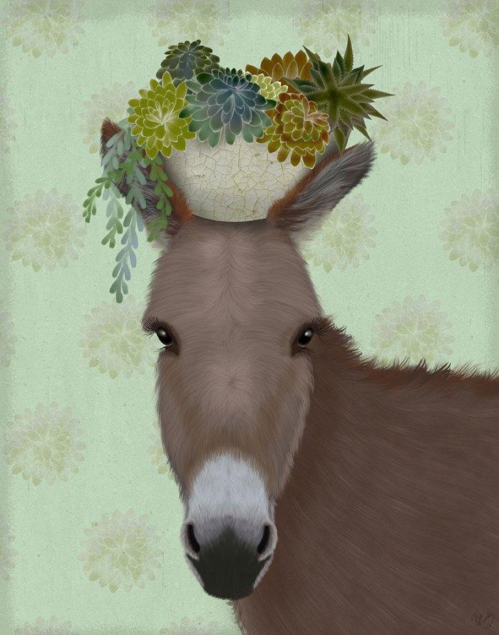 Donkey Succulent