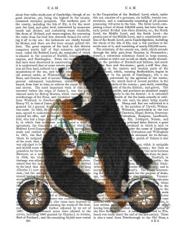 Bernese Scooter