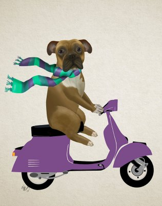 Boxer On Moped