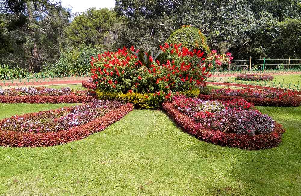 Government Botanical Gardens,Ooty