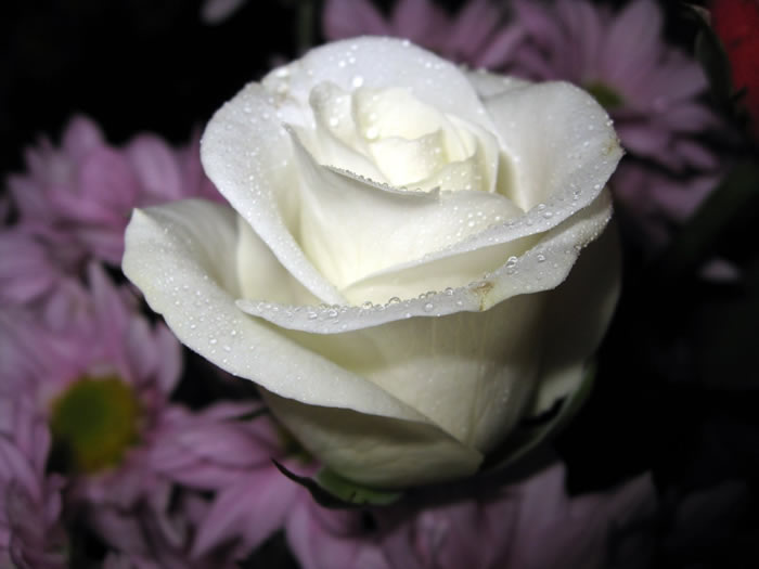 """""""https://i0.wp.com/www.fabiovisentin.com/photography/photo/12/roses-wallpaper-roses-bouquets4473_high.jpg"""" grafik dosyası hatalı olduğu için gösterilemiyor."""