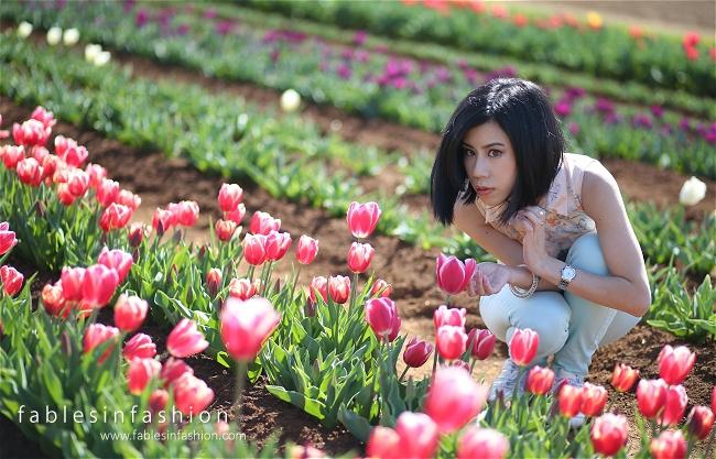 Tesselaar Tulip Festival 2014