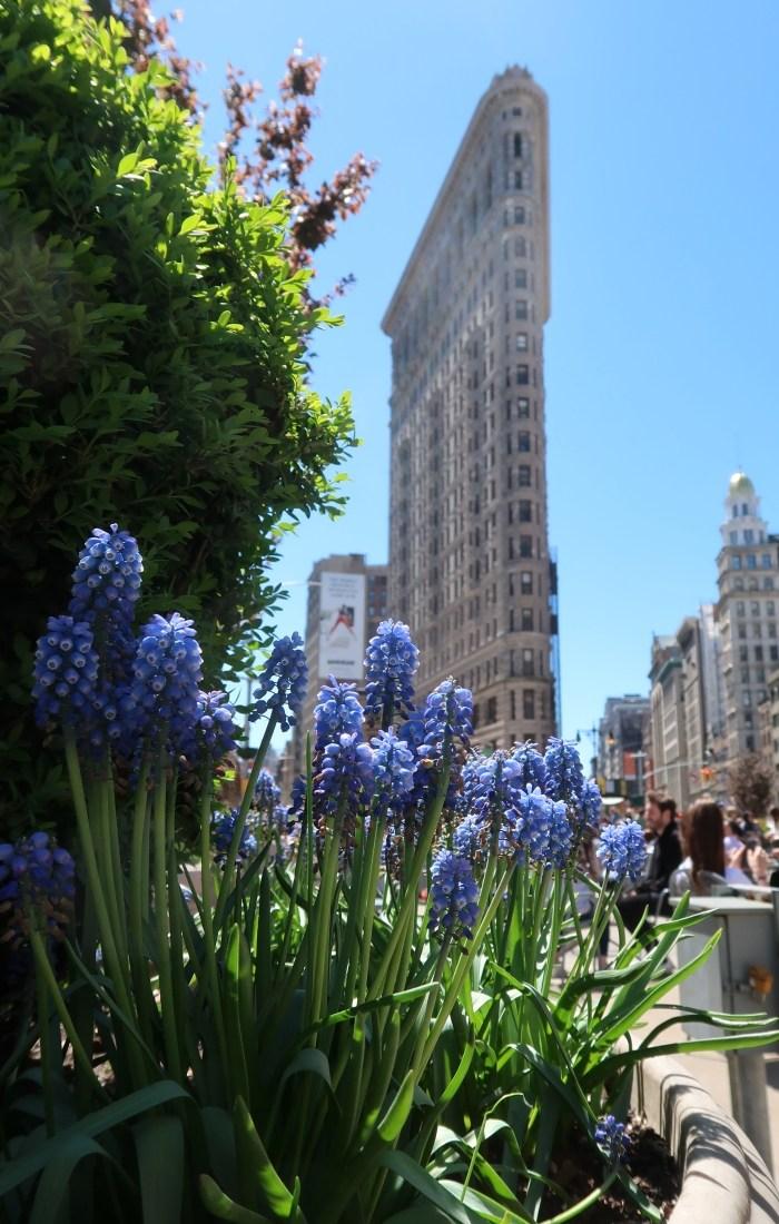 New York City Adventures!