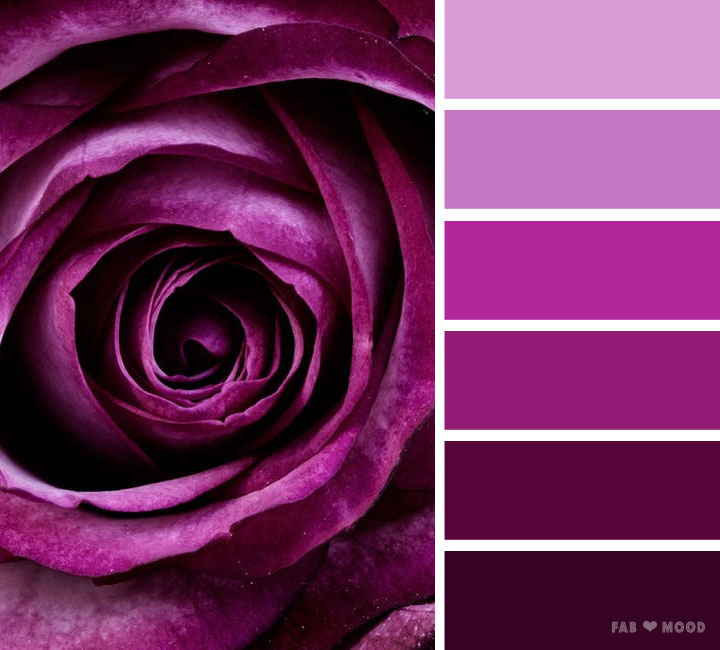 Purple rose color scheme  Shades of dark puprle color palette