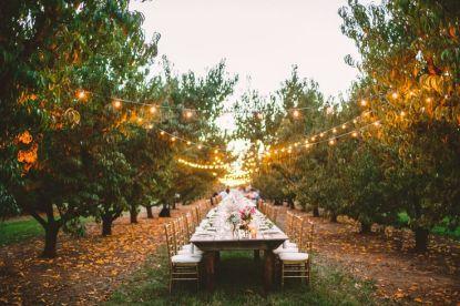 A Cozy Wedding Reception in The Peach Orchard | Photography : marymargaretsmith.com | https://www.fabmood.com/a-cozy-fall-wedding-in-the-peach-orchard #peach #fallwedding