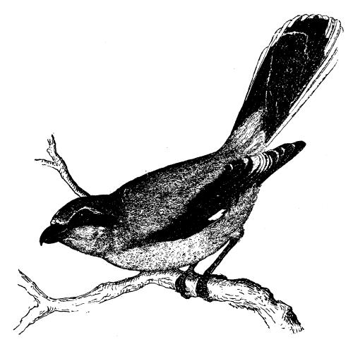 free & vintage bird clip art