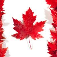 Cum se obține viza de Canada pentru cetățenii români?