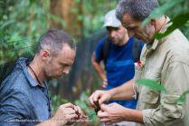 Stéphane Garnier et Bruno Faivre libèrent un oiseau capturé dans les filets.