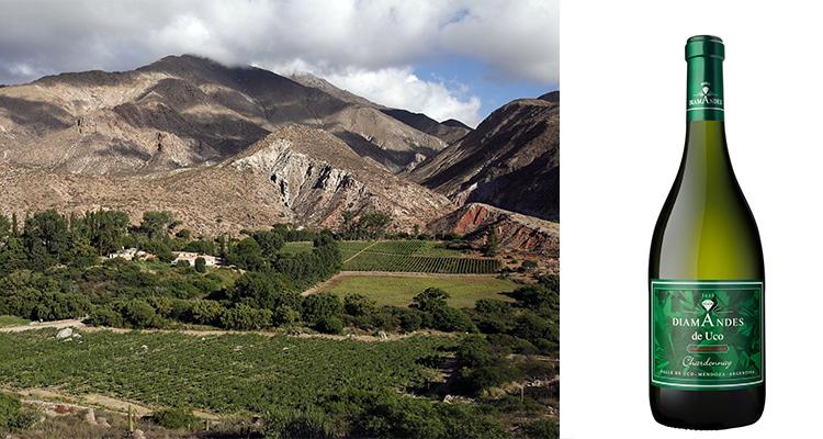 Tacuil, donde primero llegó el Sauvignon salteño. Diamandes uno de los primeros Chardonnay de elite.