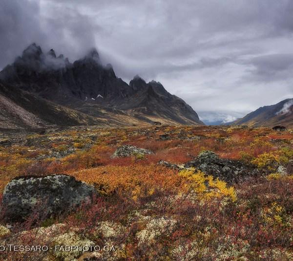 Tombstone Territorial Park, Yukon Territories, Canada, Talus Lake, Grizzly Lake, Divide Lake,Yukon Fall Colours, colors