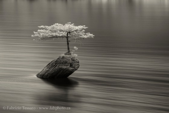 Fairy Lake, Bonsai,Vancouver Island