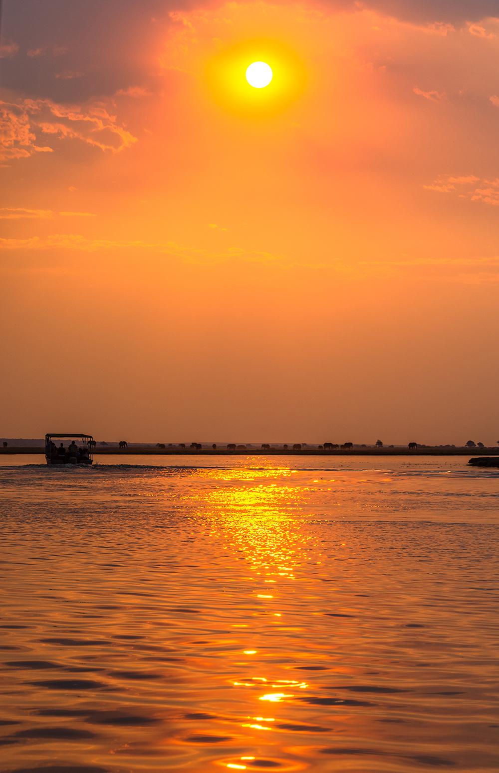 Chobe National Park,  elefanti al tramonto