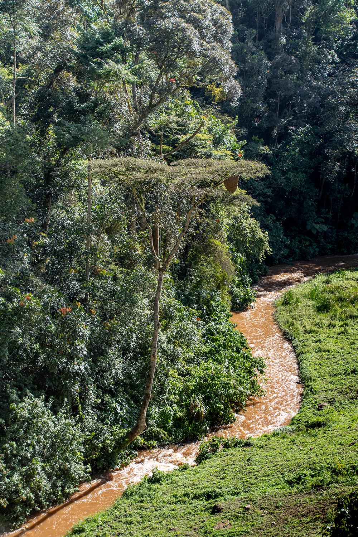 Uganda, gorilla trekking a Kisoro, nel Parco Nazionale della Foresta Impenetrabile di Bwindi