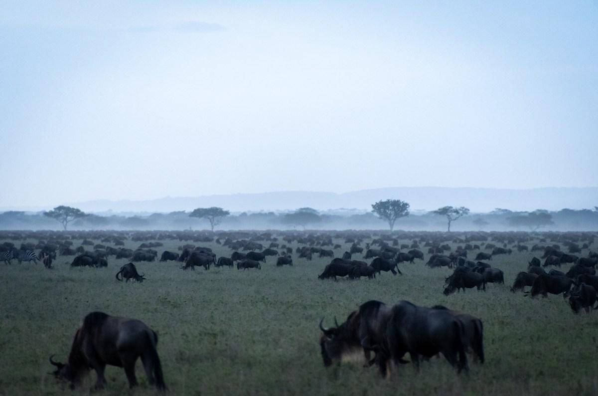 Tanzania, la grande migrazione del Serengeti