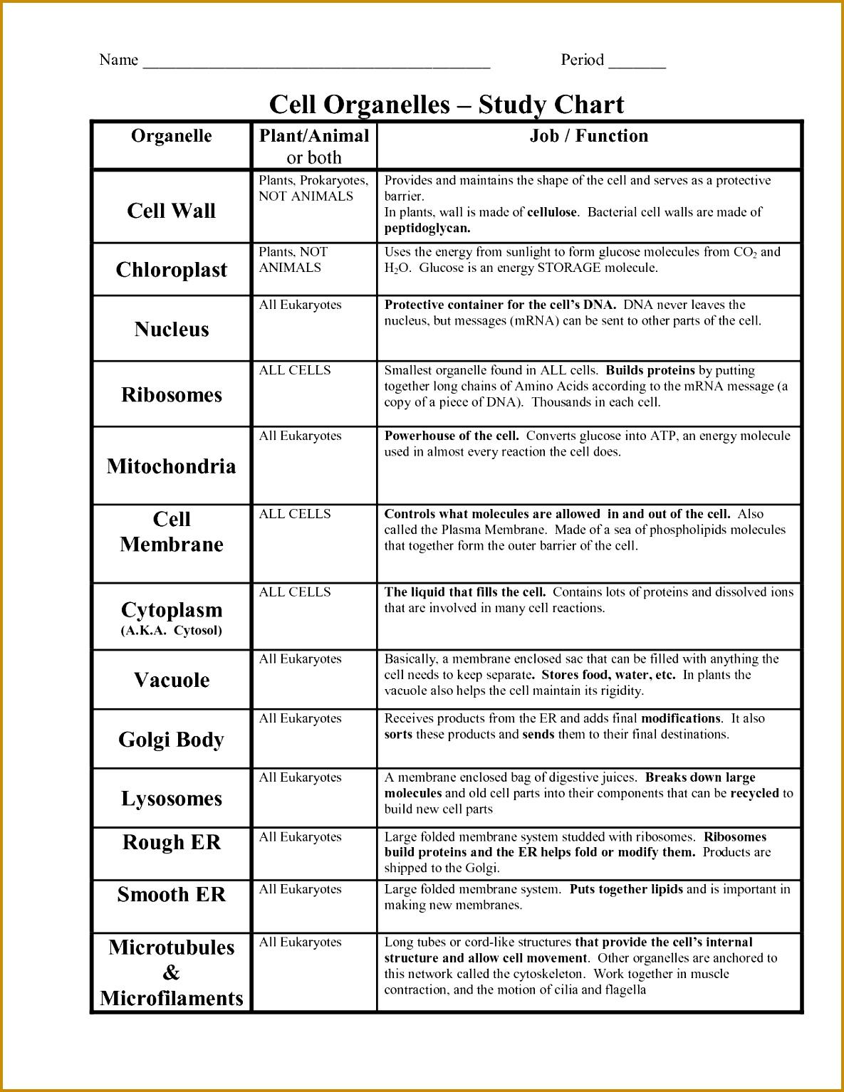 6 Cell Organelles Worksheet