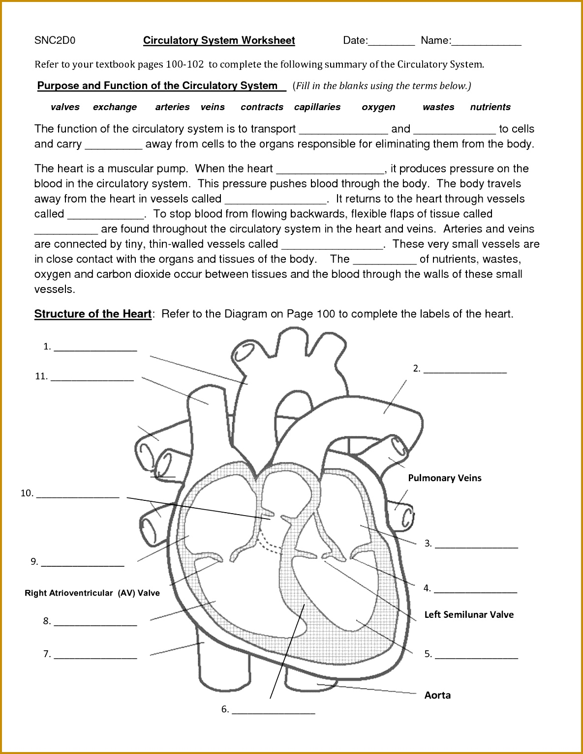 4 Circulatory System Worksheet