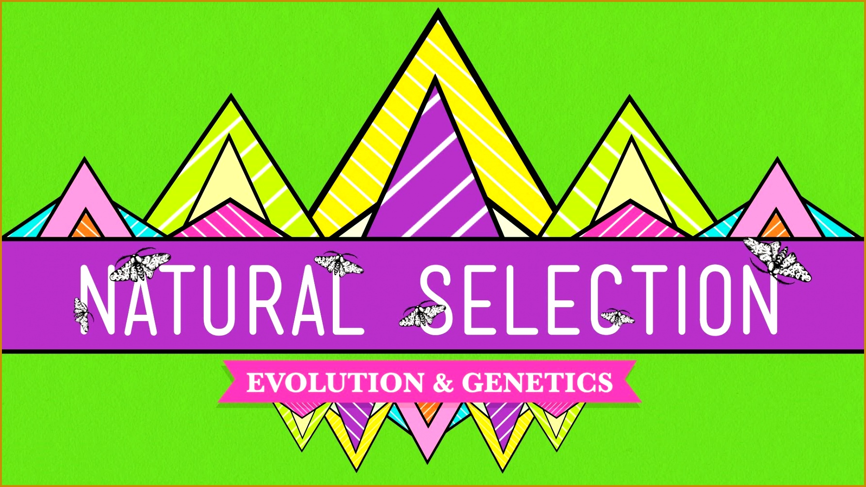 4 Darwins Natural Selection Worksheet
