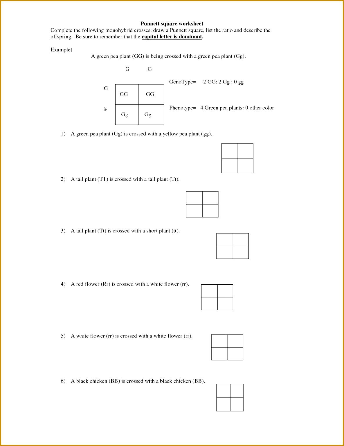 5 Dihybrid Cross Worksheet Answers