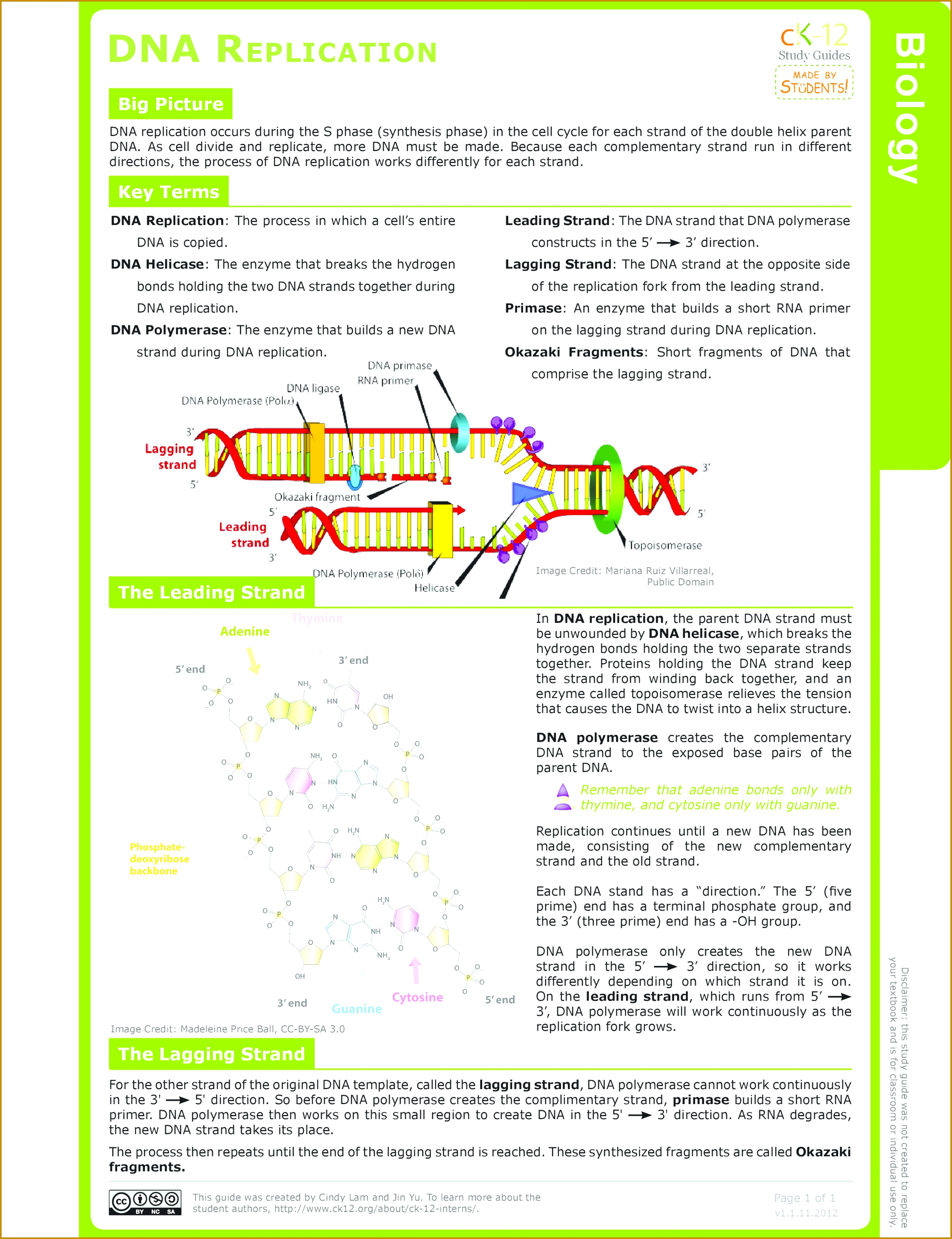 5 Dna Base Pairing Worksheet Answers