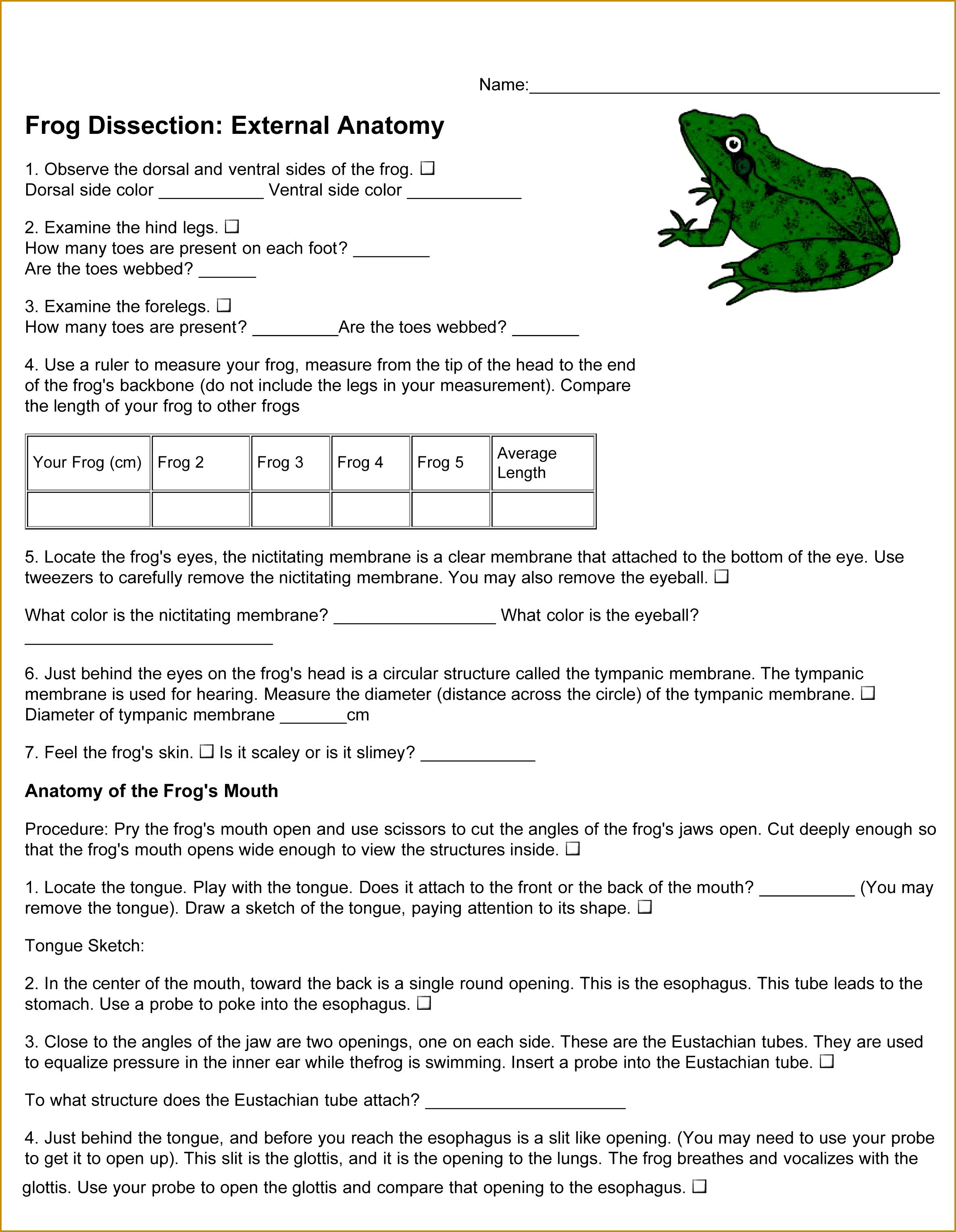 4 Frog Dissection Worksheet