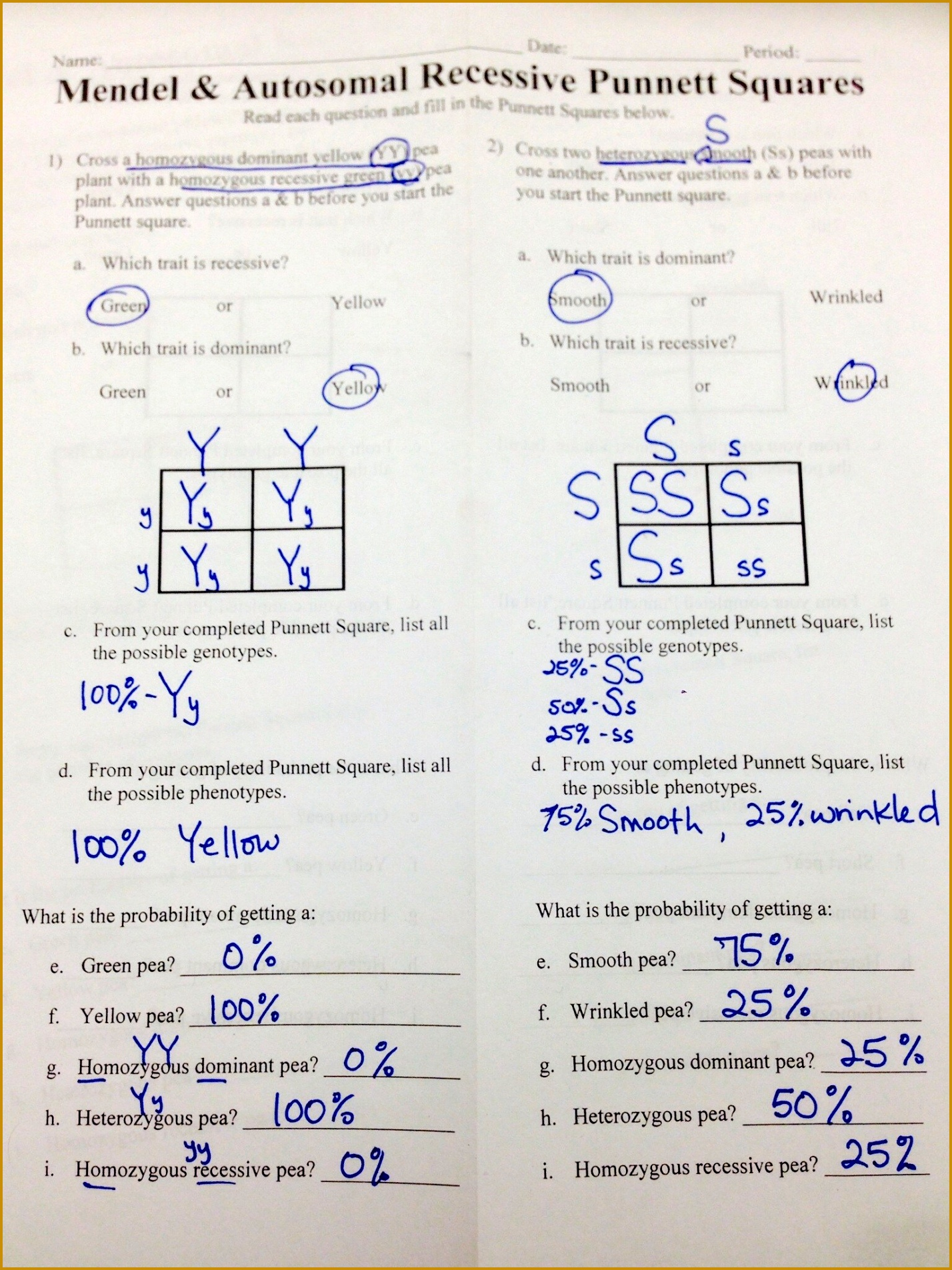 5 Genotype And Phenotype Worksheet Answers