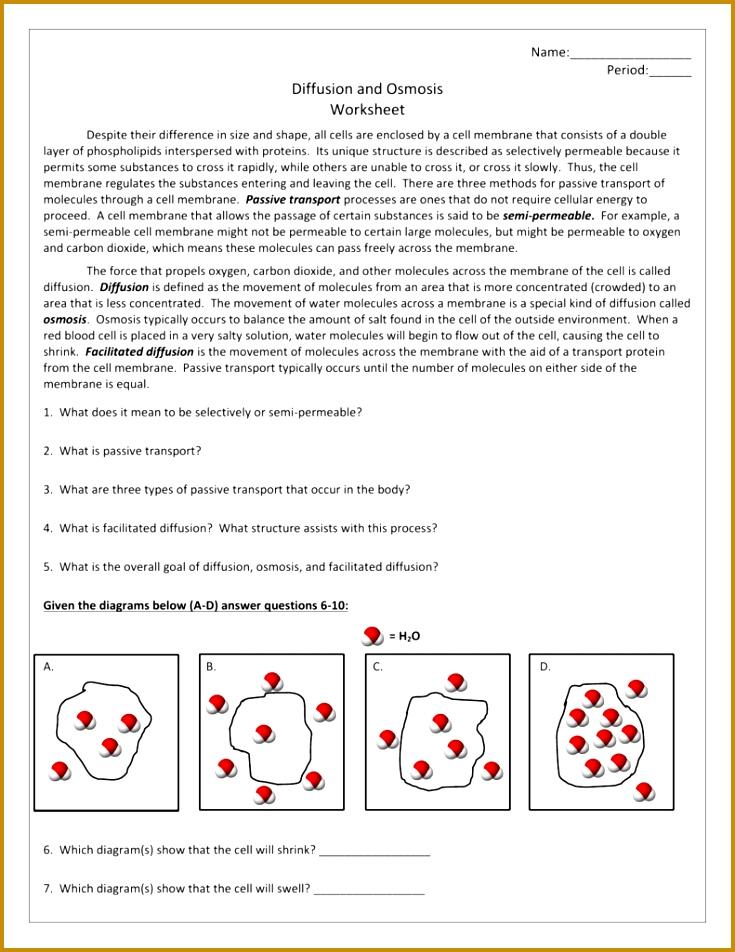 7 Osmosis Worksheet