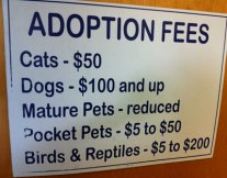 Fab-Finds-Featured-Story-flagler-humane-society-adoption-fees