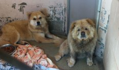 Fab-Finds-Featured-Story-flagler-humane-society-chows