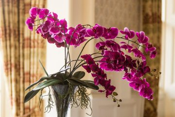 Orchid Centrepiece in tall vase
