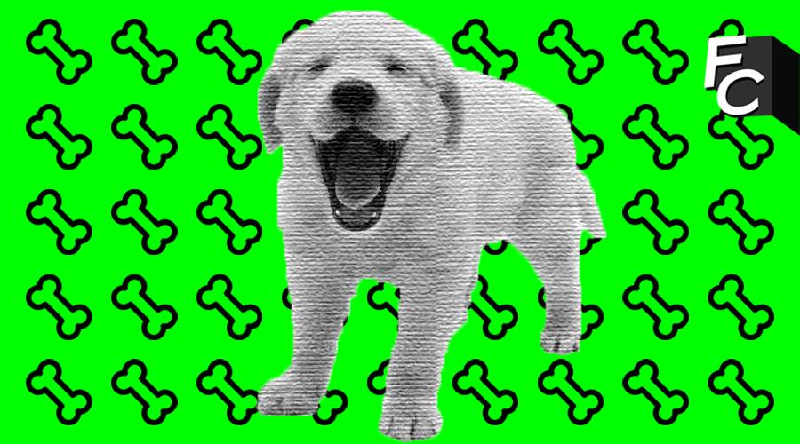 Il suo cane sta male: l'Università le concede il permesso per assisterlo. #BellaStoria