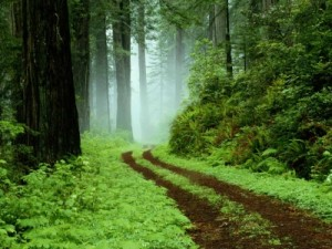 400_1221409278_sendero-bosque