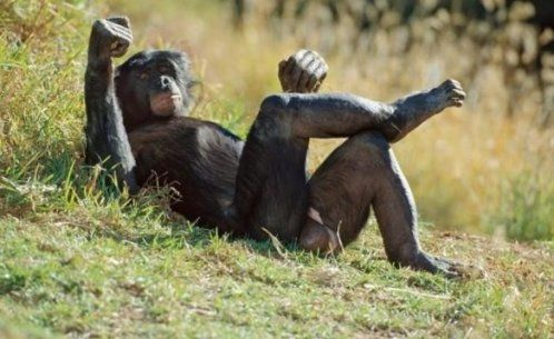Chimpanzee having sex with a lady pics 69
