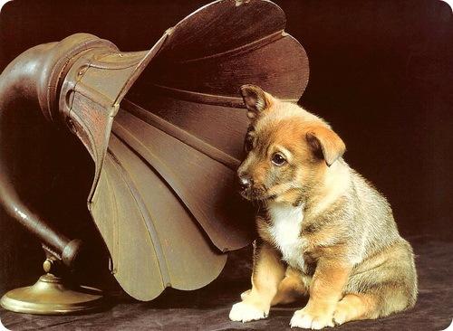 Ветеринары-психологи выяснили, какую музыку предпочитают домашние любимцы