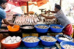 fish, market, Kochi, Kerala, South India, India, Faces Places and Plates blog