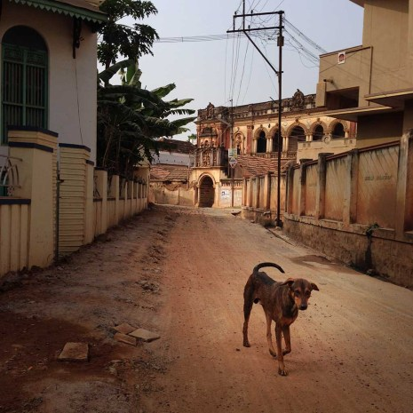 dog, Karaikudi, Chettinad, Tamil Nadu, South India, India, Faces Places and Plates blog