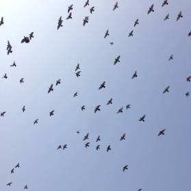 Black birds fly in a blue sky over the Nayakar Mahal Palace courtyard.
