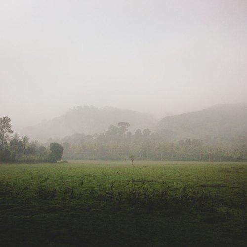 Jungle walk, Periyar National Park and Tiger Reserve, South India.