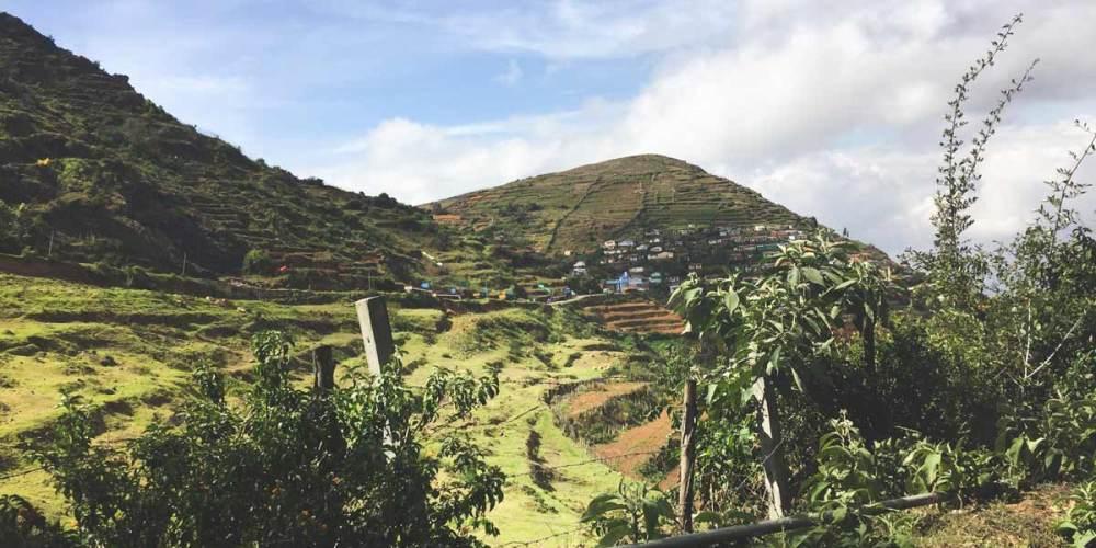 Wayanad-paddy-fields